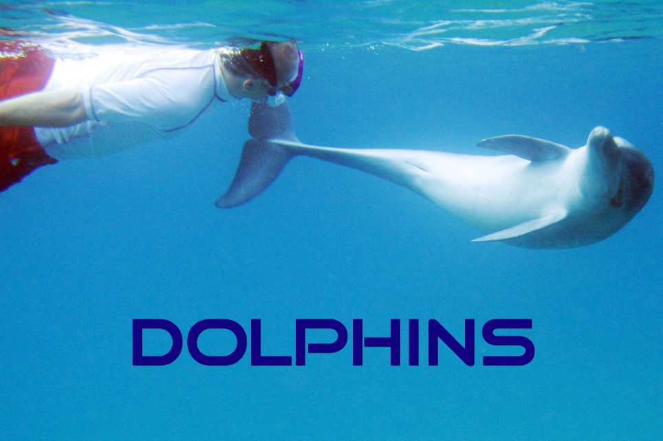 'In Search of Dolphins' - Distant Shores Inflight Magazine, UK